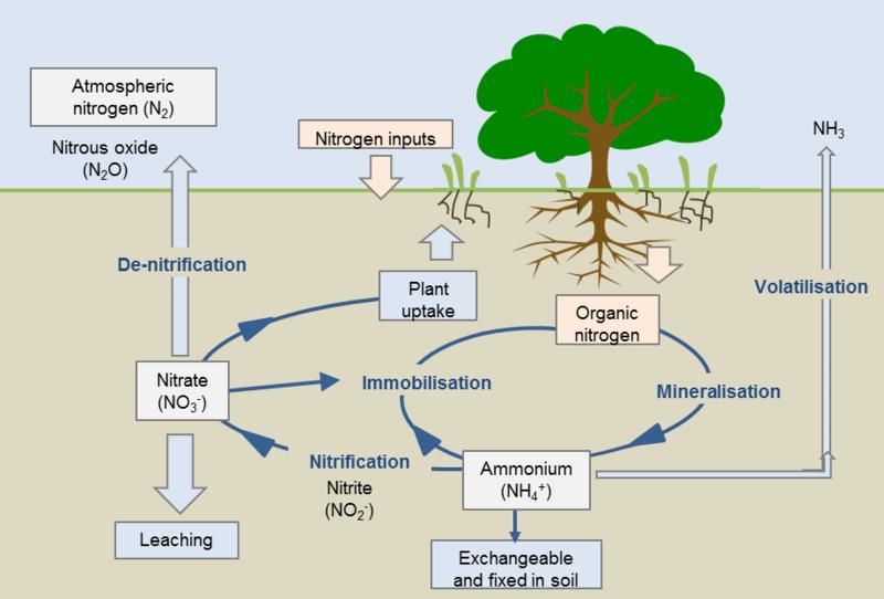 Orchard Management  Nutrition Series  U2013 Fert 101 Nitrogen